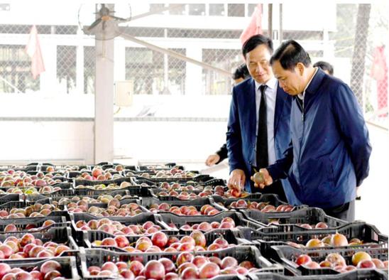 Ngành Nông nghiệp vượt khó, nỗ lực phấn đấu vượt mục tiêu